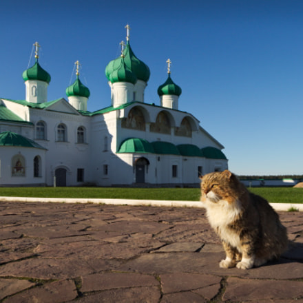 Monastery cat, Canon EOS 650D, Canon EF-S 10-18mm f/4.5-5.6 IS STM