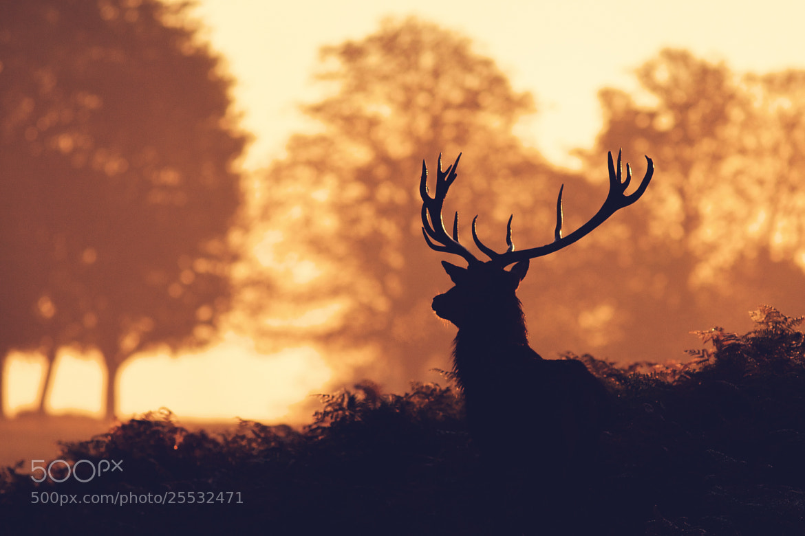 Photograph split tone red by Mark Bridger on 500px
