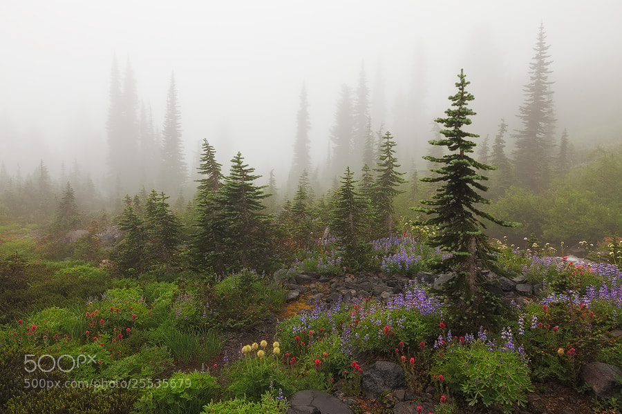 Photograph Misty Meadows by Sarah Marino on 500px