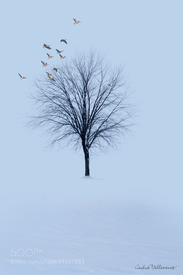 Photograph Winter fly by Andre Villeneuve on 500px