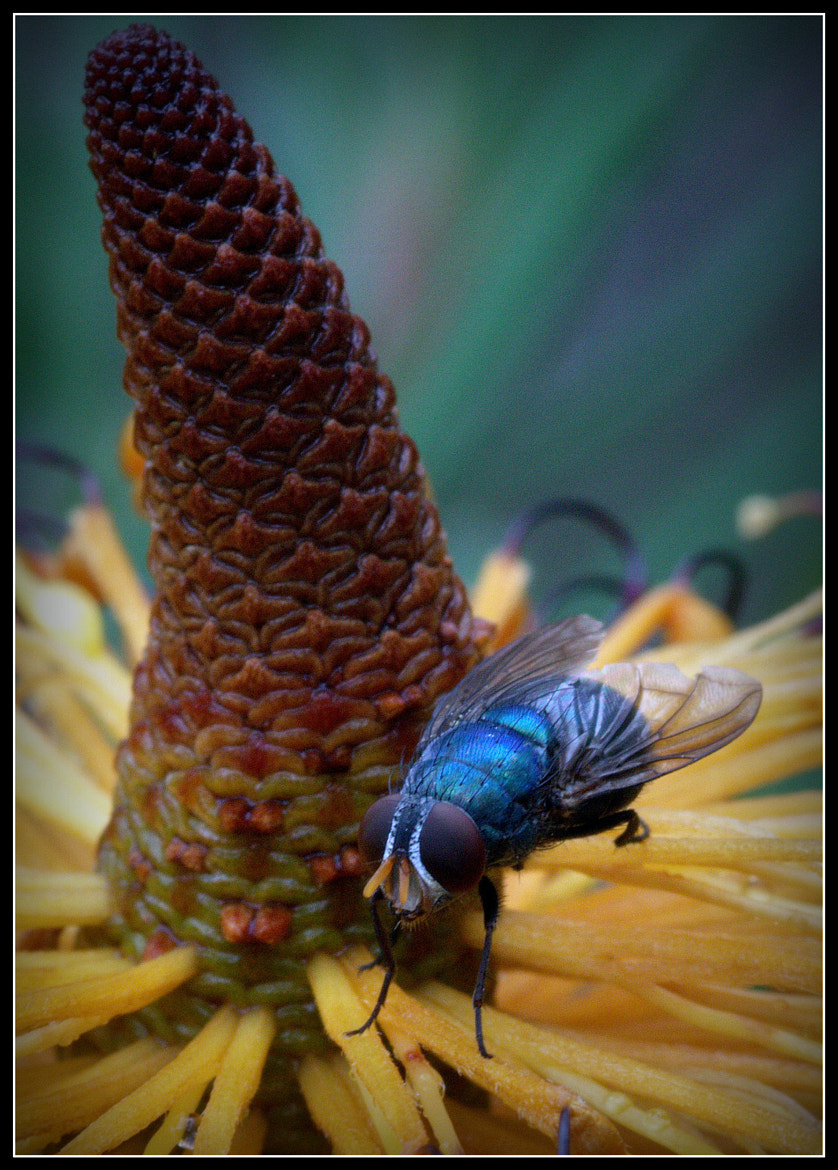 Photograph Big blue blowie by Alan Daniel on 500px