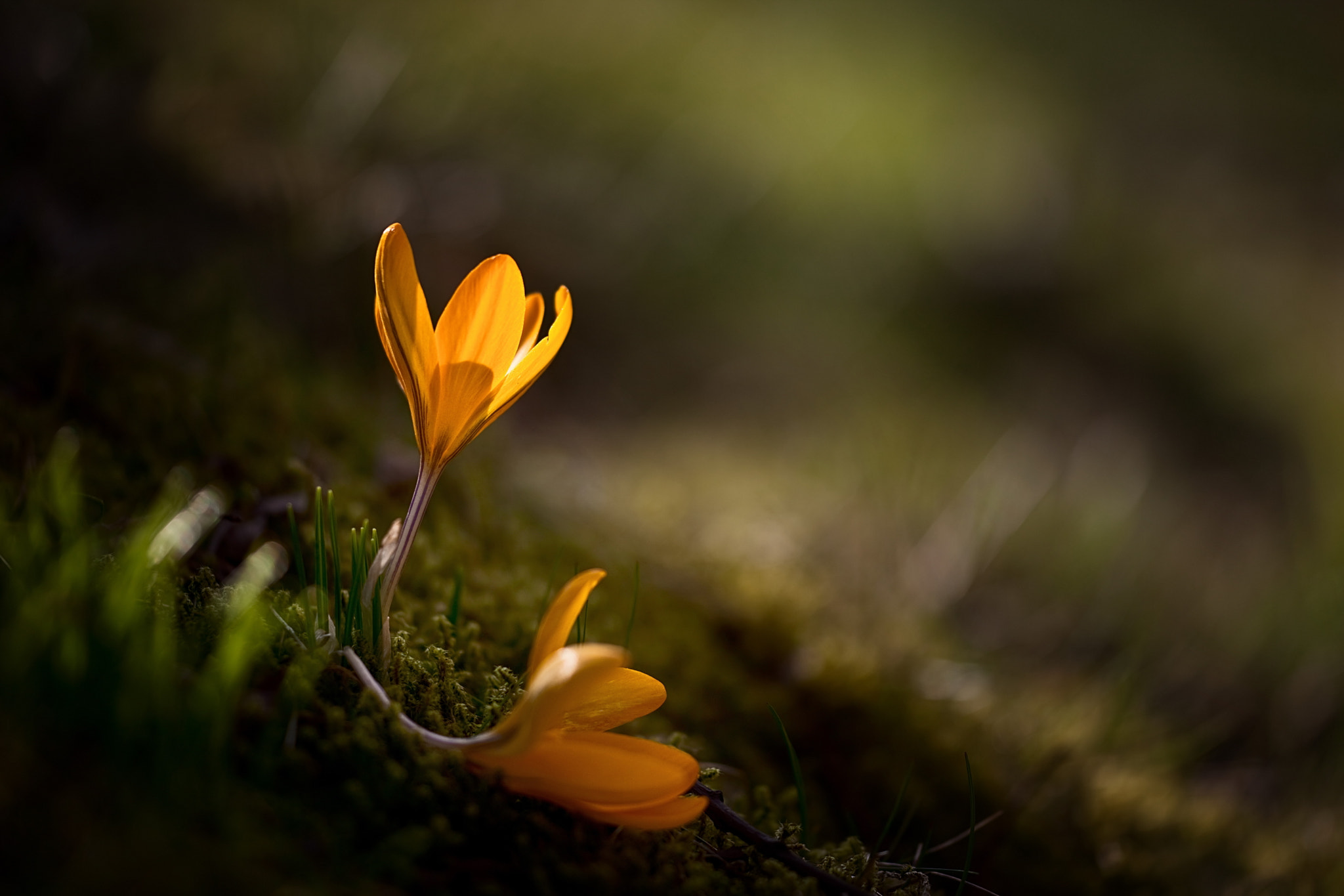 Photograph soon it's time again by Birgit Pittelkow on 500px