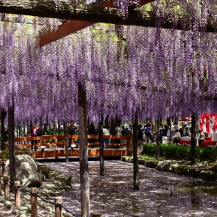 Fuji's park where Fuji's, Nikon D7000, AF Nikkor 24mm f/2.8D