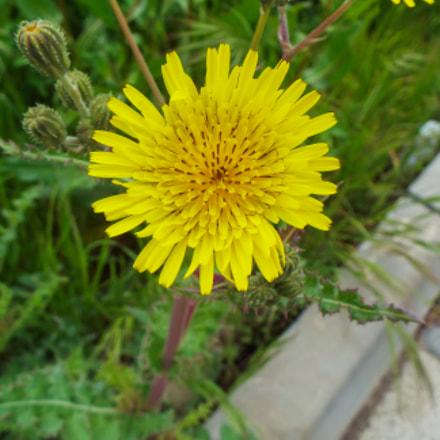 Flower/ Çiçek, Fujifilm FinePix S8200