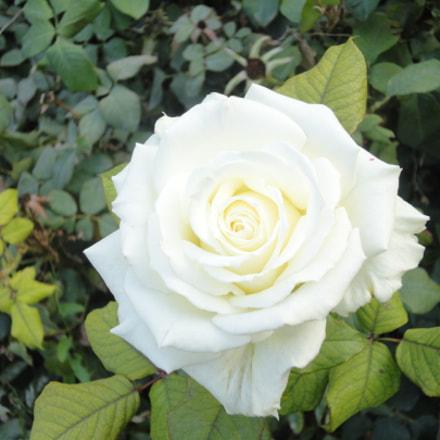 Flowers, Sony DSC-W380
