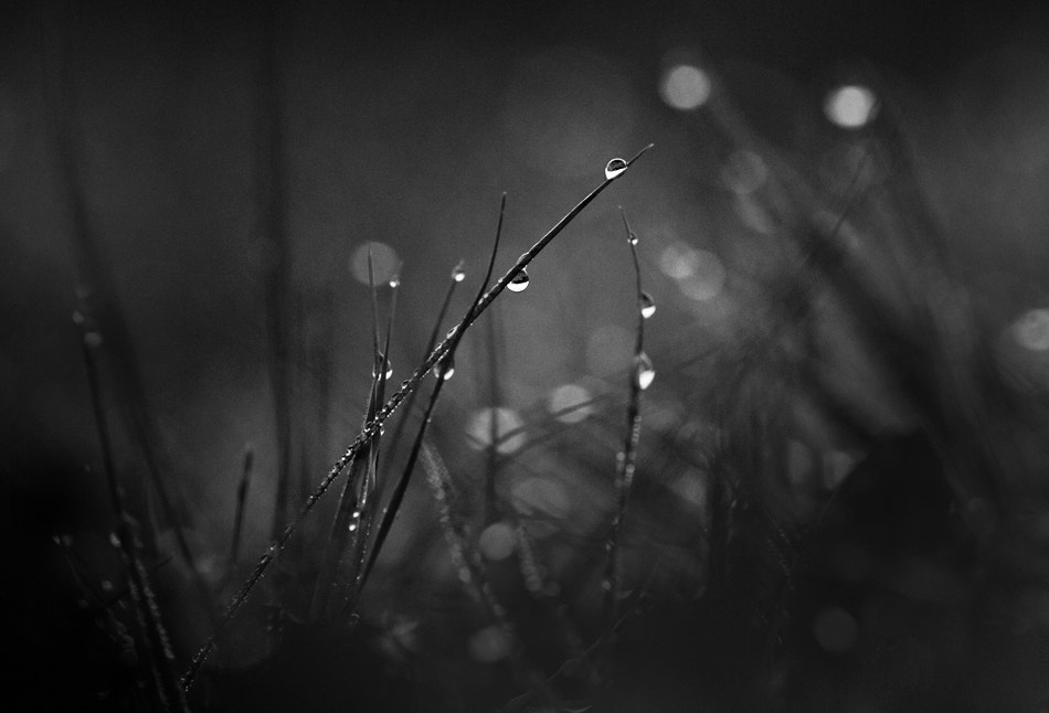 Photograph Morning Dew by Keren Segev on 500px