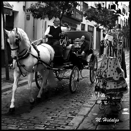 El paseo por Sevilla, Canon POWERSHOT A640