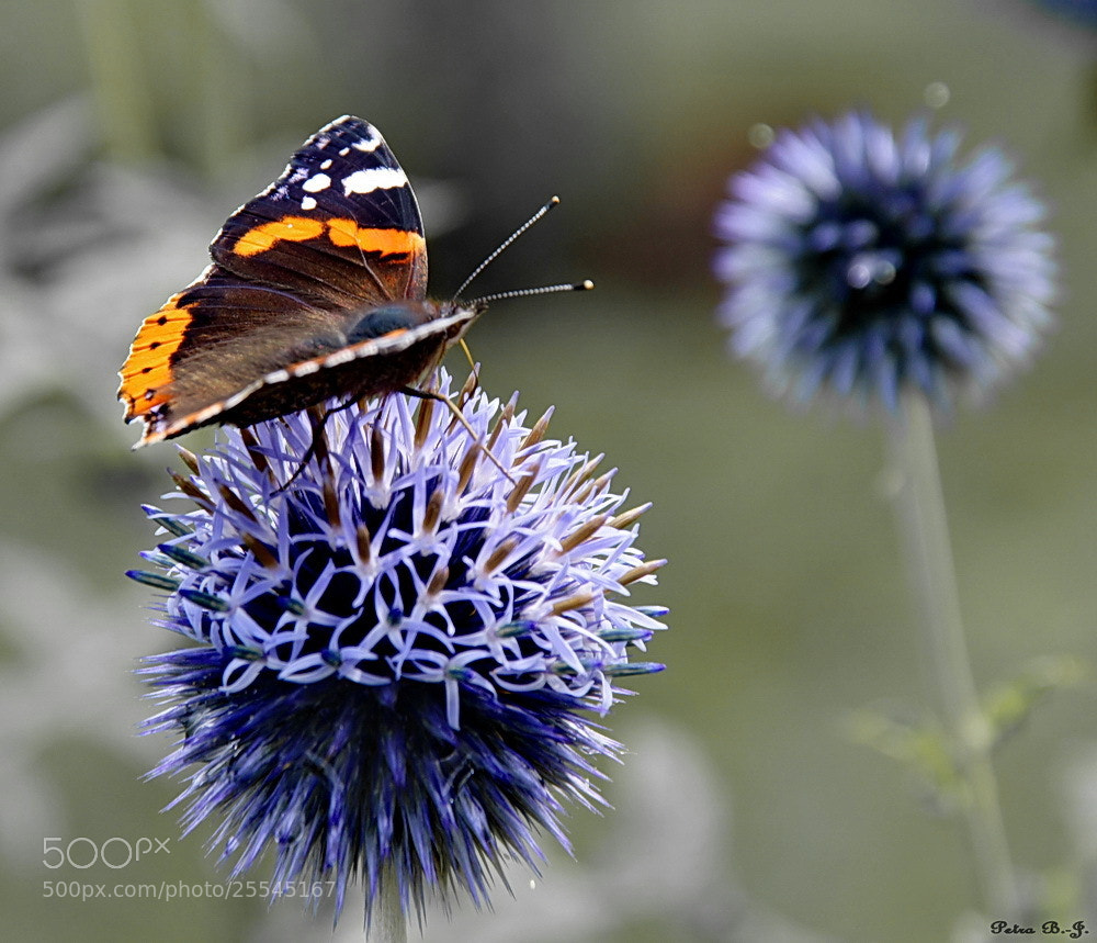 Photograph Thistle landing pad by Petra B-J. on 500px