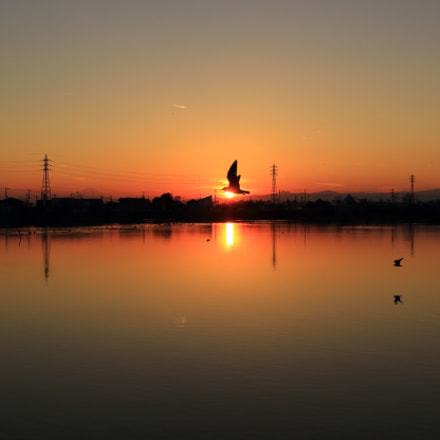 A bird is flying, Canon EOS KISS X7, Canon EF-S 24mm f/2.8 STM