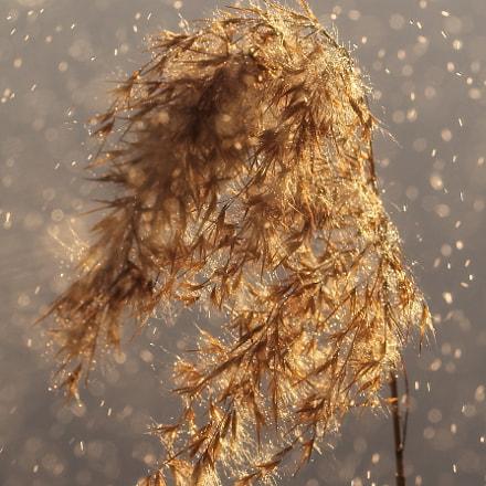 Light and Rain, Canon EOS 60D