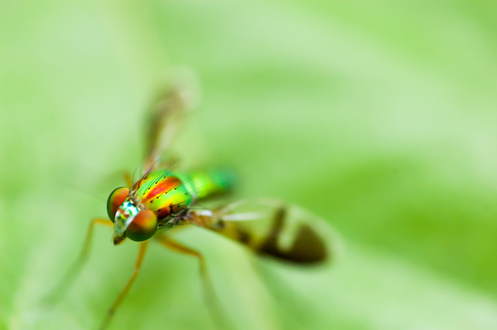 Photograph supa fly! zoom zoom by Kok Leong Lee on 500px