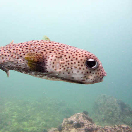Puffer FIsh, Panasonic DMC-TS6
