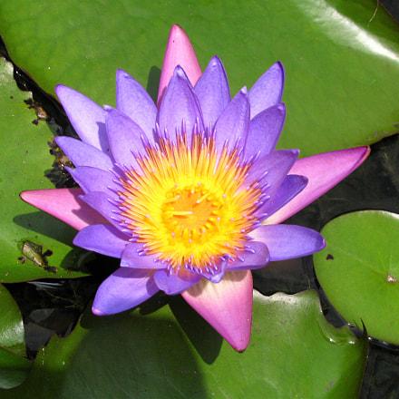 Lotus, Canon POWERSHOT SX110 IS