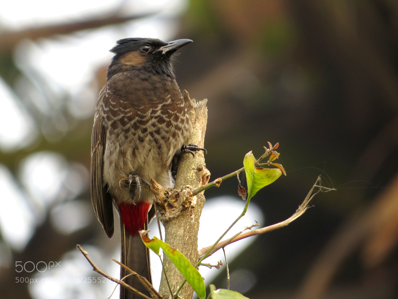 Photograph bird by Raju Sarkar on 500px
