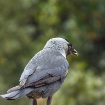 A Bird in Anadolu, Fujifilm FinePix S8200