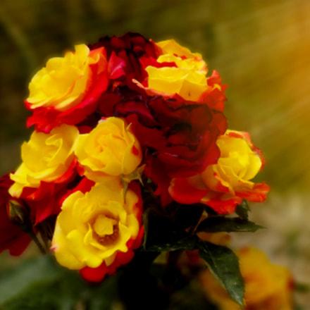 Red_Yellow, Fujifilm FinePix S4000