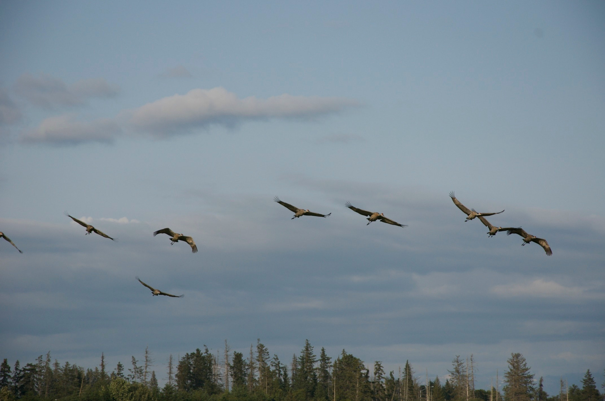 Photograph Birds in flight by Laiko Brenham on 500px