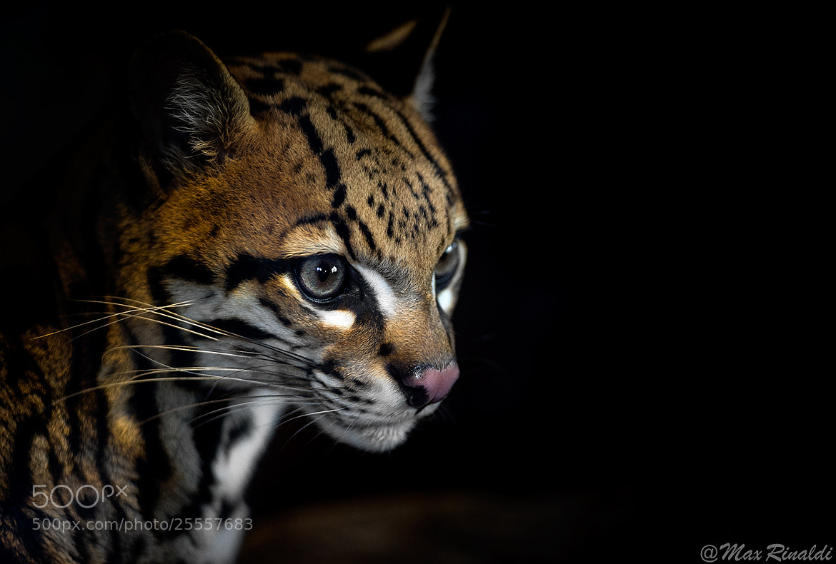 Photograph The Pride by Max Rinaldi on 500px