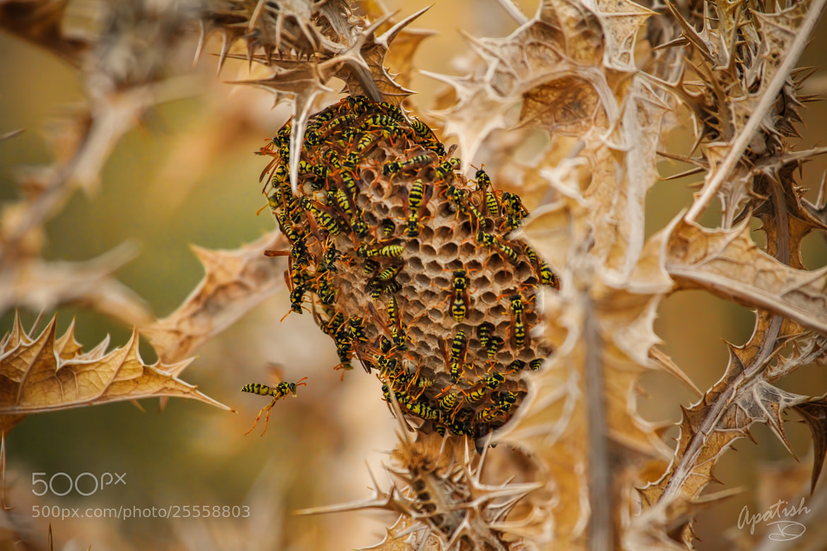 Photograph beehave by Ariel Patish on 500px