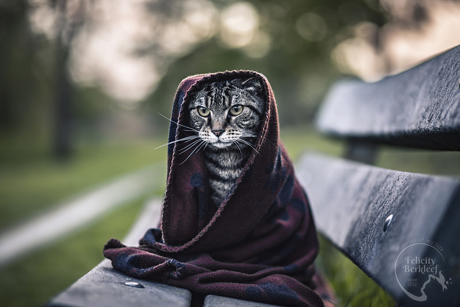 Always Be My Jedi Cat, автор — Felicity Berkleef на 500px.com