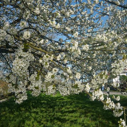 Spring flowers, Panasonic DMC-LS80