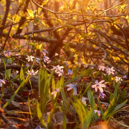 Spring colors, Panasonic DMC-TZ35