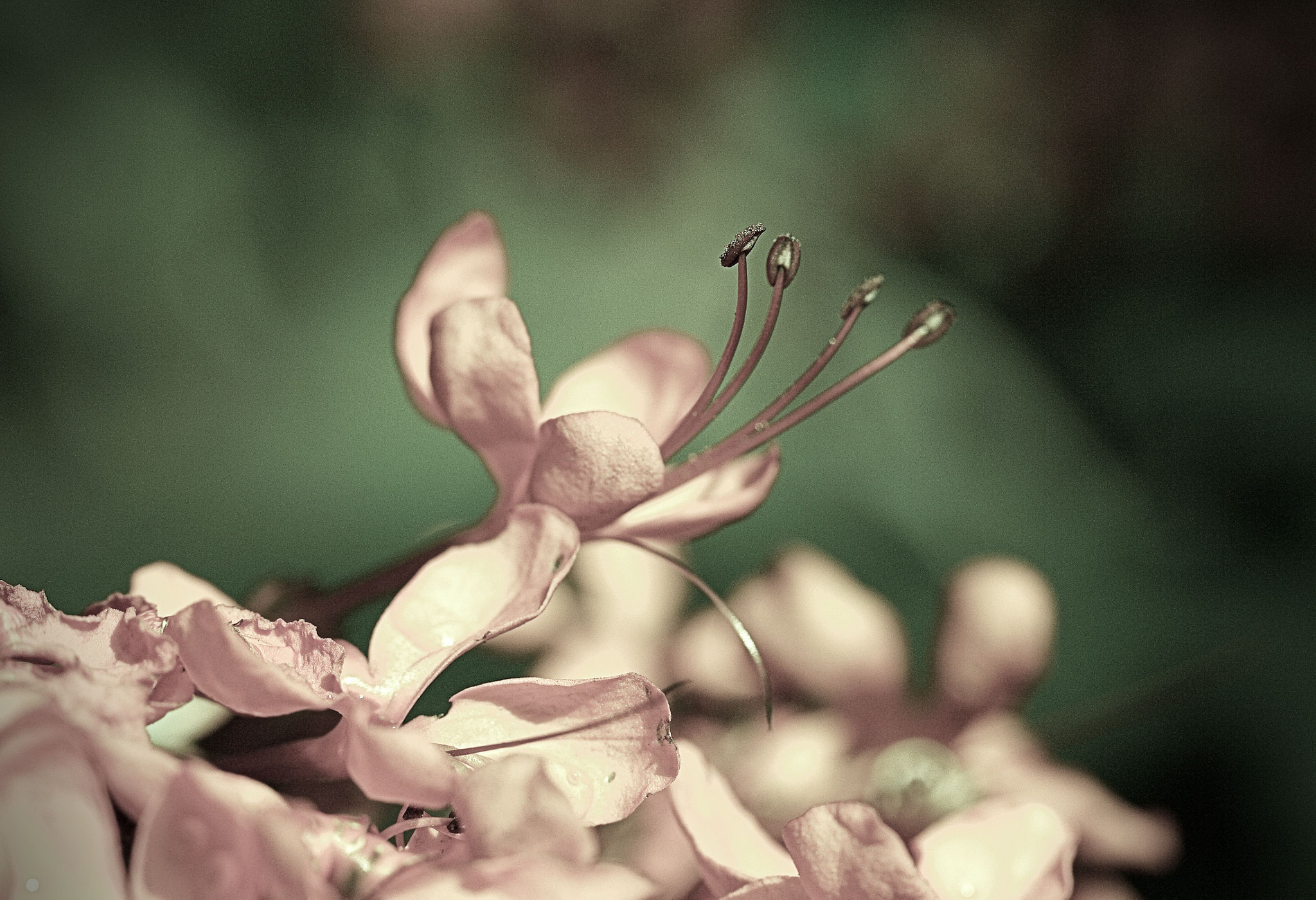 Photograph Vintage Pink by Johnny Gomez on 500px