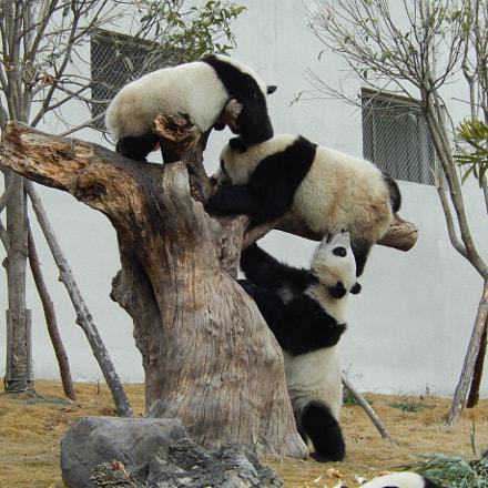 Panda Zoo, Nikon COOLPIX S9400