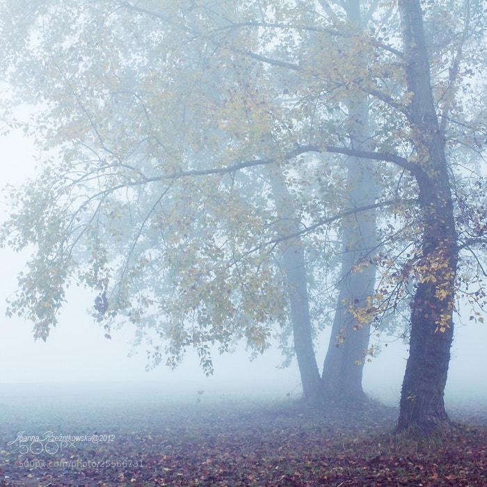 Photograph Misty Morning VII by Joanna Rzeźnikowska on 500px