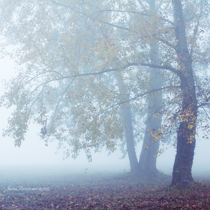 Photograph Misty Morning VII by Joanna Rzeźnikowska on 500px