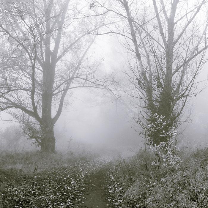 Photograph Misty Morning IX by Joanna Rzeźnikowska on 500px