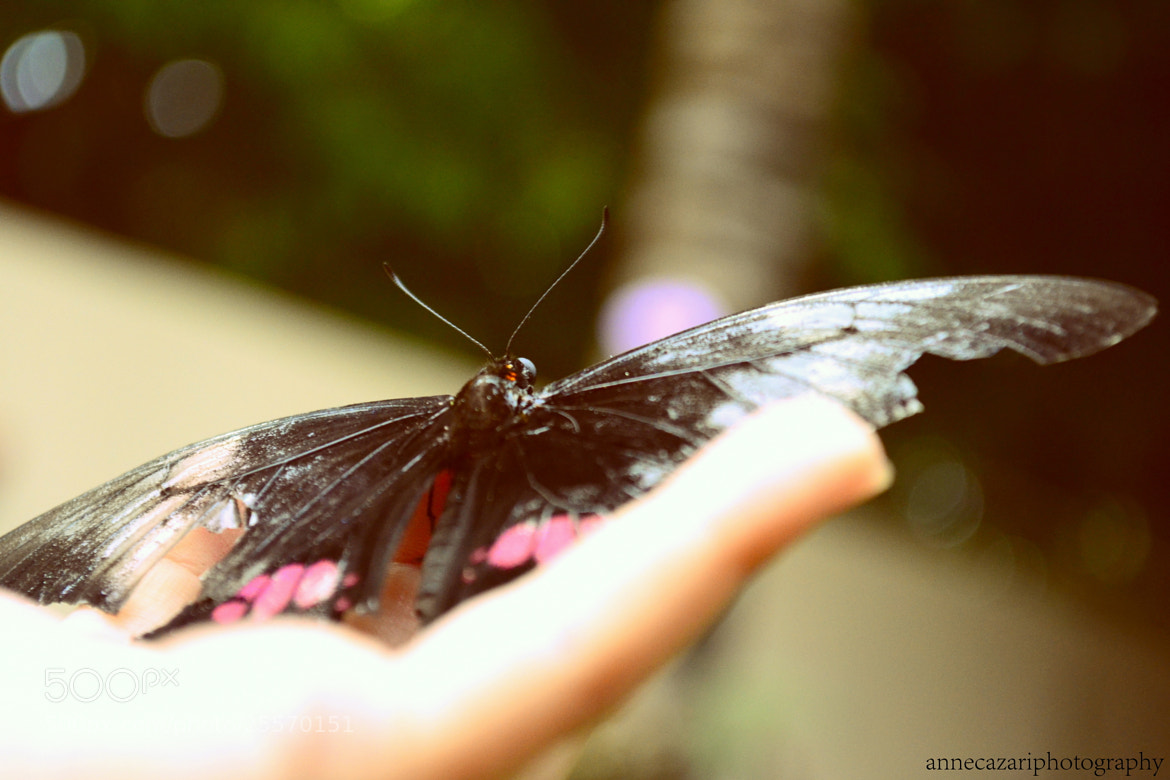 Photograph You need to go, butterfly. by Anne Cazari on 500px