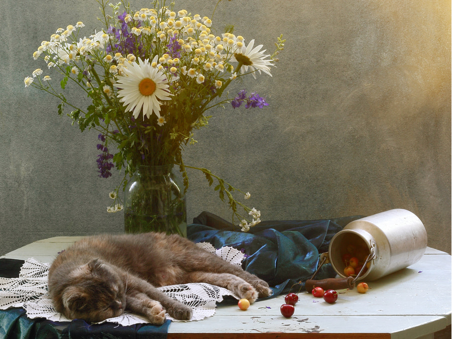 cat mom resting, автор — Galina (UstinaGreen) на 500px.com