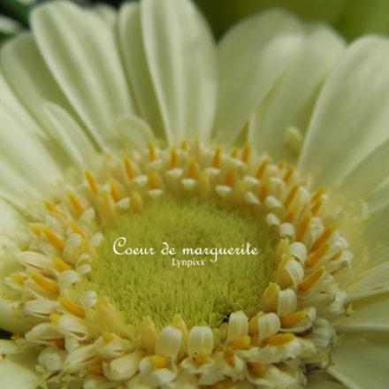 Coeur de marguerite, Nikon COOLPIX S8200