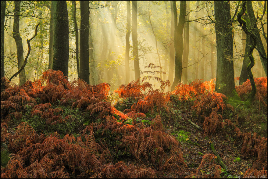 Photograph Fern by Jaap van den Helm on 500px