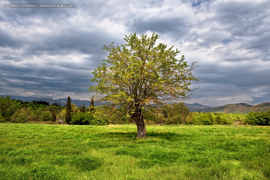 Photograph The Tree by Stelios  Kritikakis on 500px