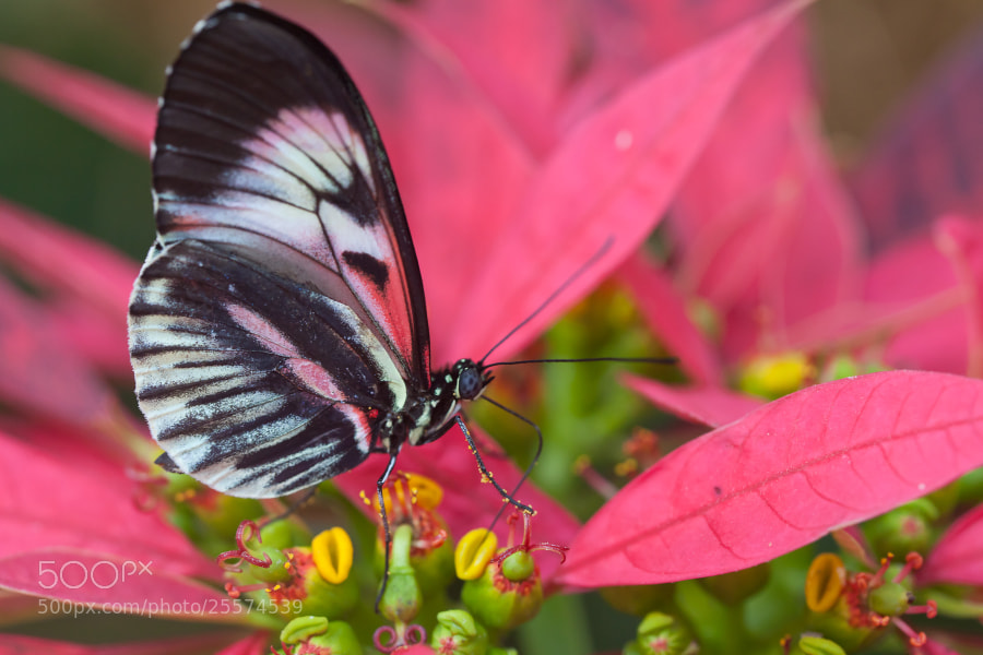 Butterfly World, Coconut Creek, Florida.