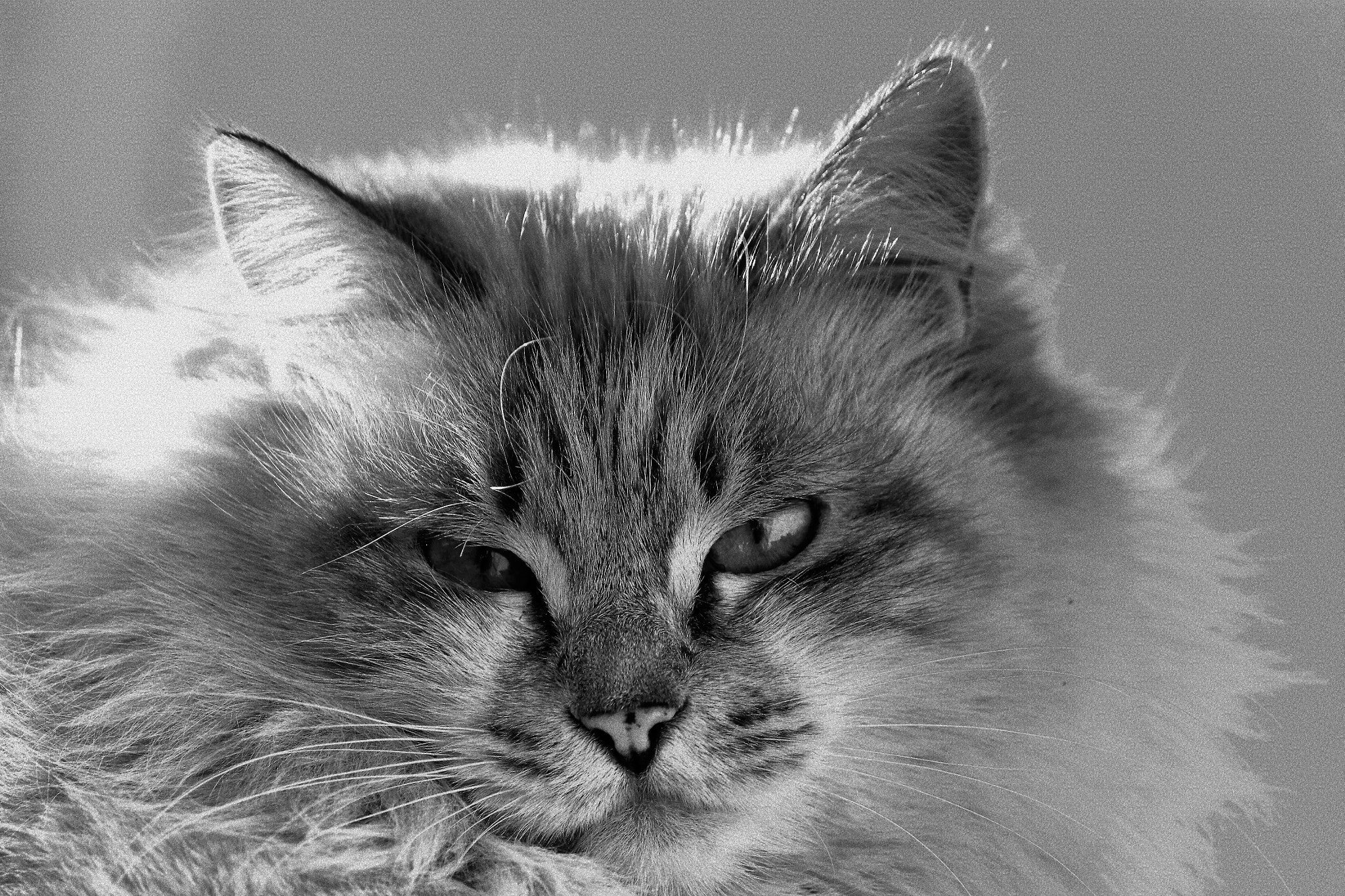Photograph Felino. by Miguel Silva on 500px