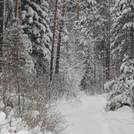 Winter forest, Sony DSC-H100