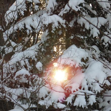 Winter sun in the, Sony DSC-H100