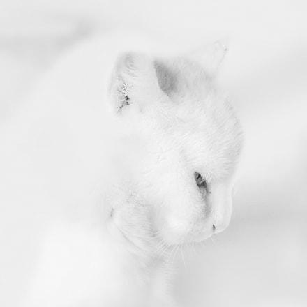simply white, Fujifilm FinePix S9600