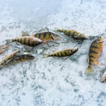 Ice Fishing - the, Panasonic DMC-TS5