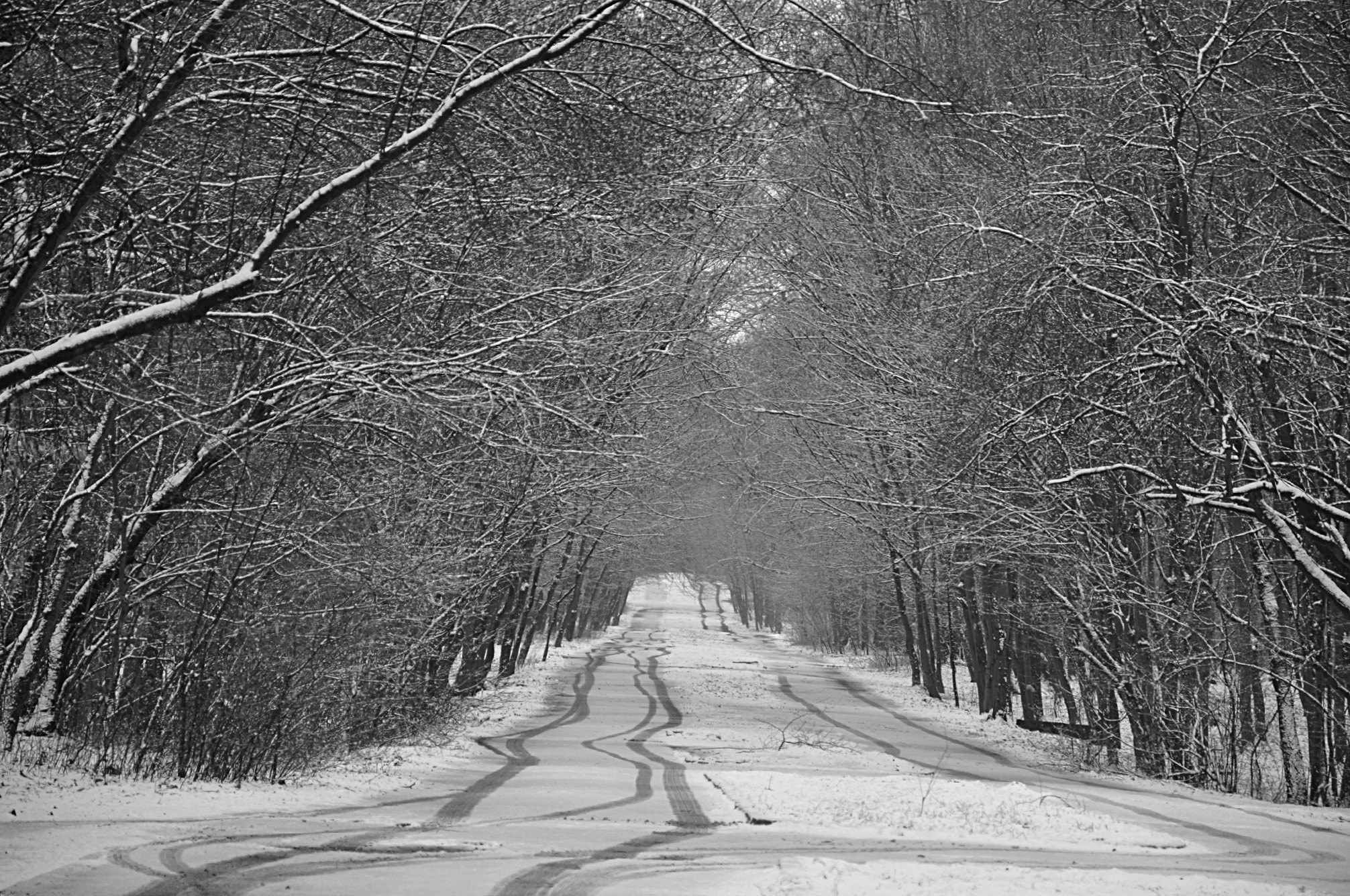 Photograph Way to the Winter by Mihaela Floriana Soare on 500px