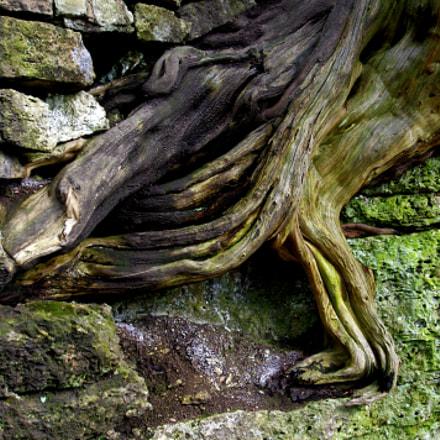 Roots, Pentax K-X, smc PENTAX-FA 28-80mm F3.5-5.6 AL