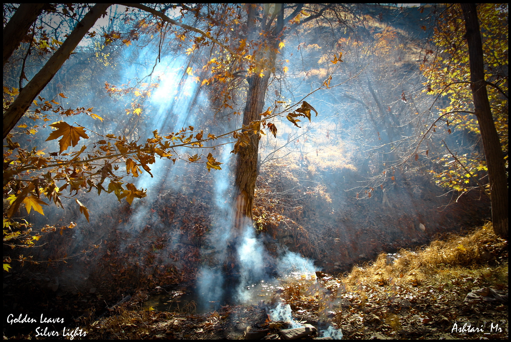 Photograph Golden Leaves Silver Lights  by Mr Ashtari on 500px
