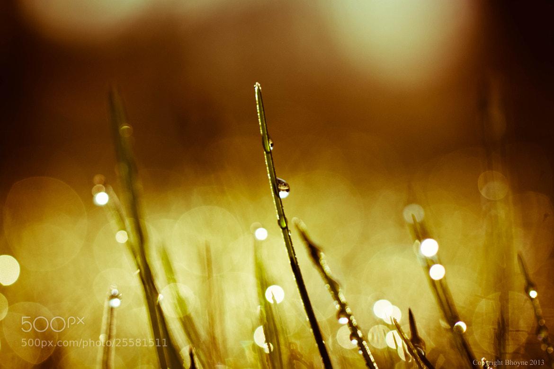 Photograph Bokeh grass by Brian Hoyne on 500px