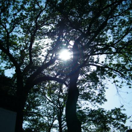 Untitled, Fujifilm FinePix S2000HD