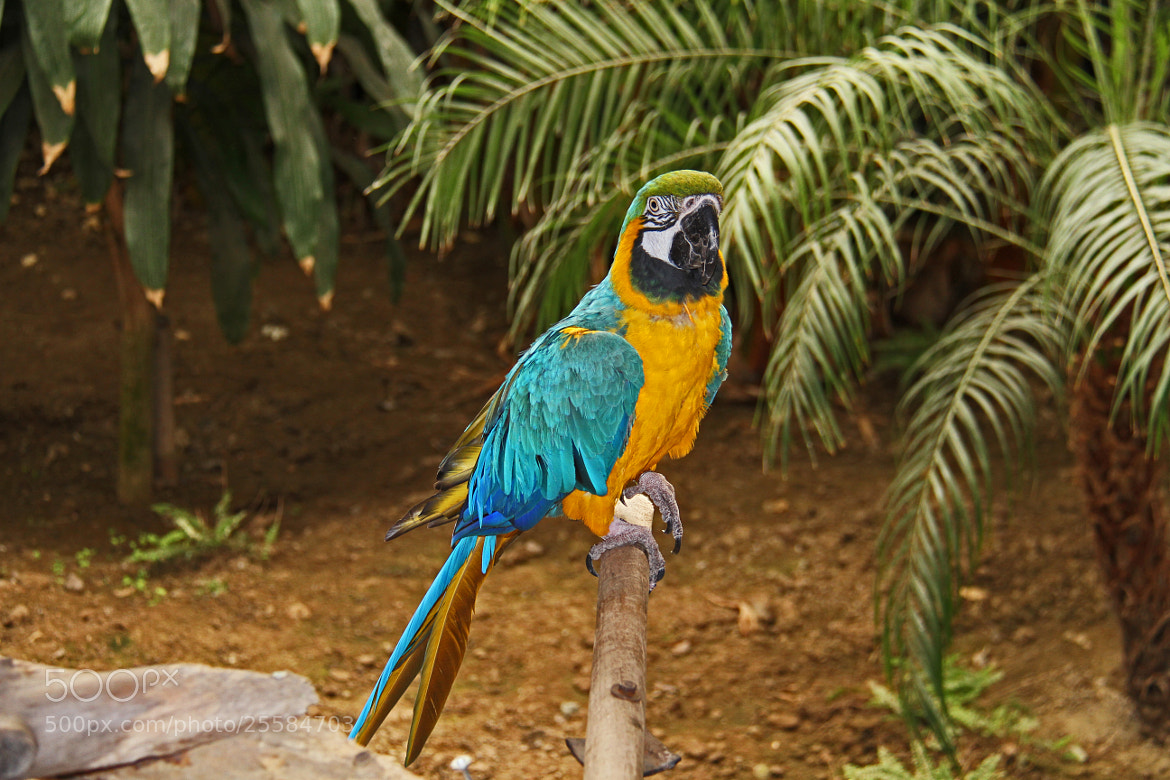 Photograph United Colors of Parrot by Hakki Arican on 500px