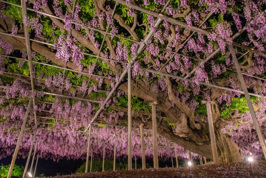 500px.comのTaisho G.さんによるDSC_0493-1.jpg