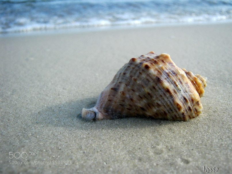 Photograph shell  by alyssa korj on 500px